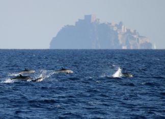 delfini a Ischia