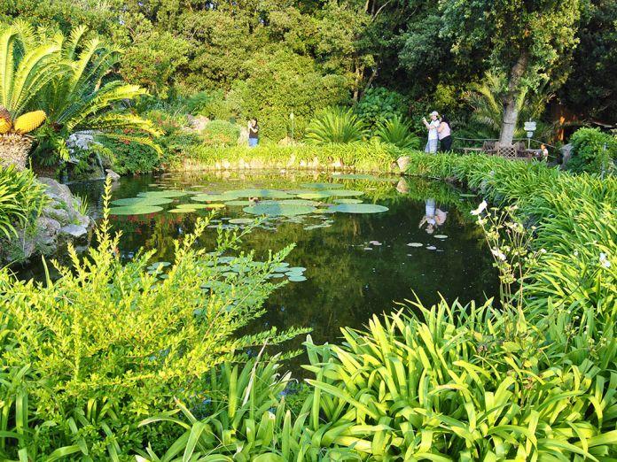 Lo stagno del Coccodrillo Giadino la Mortella Forio d'Ischia