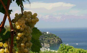 Vini d'Ischia