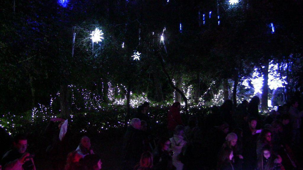 il bosco incantato - Natale a Ischia