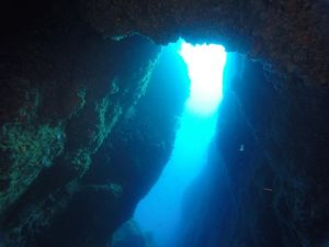 Immersione nella secca delle formiche - Info Ischia