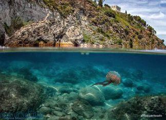 Ischia, 2020 mare eccellente