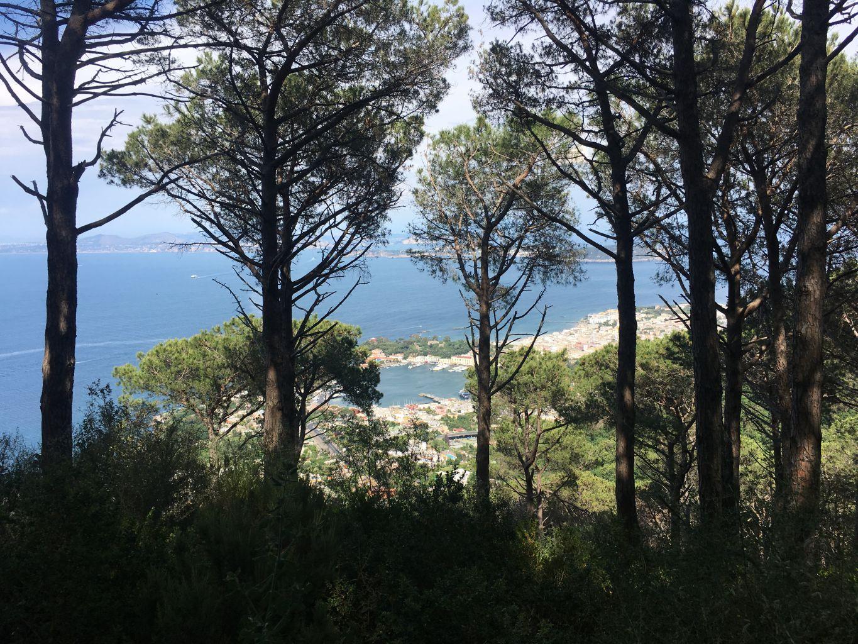 Bosco del Cretaio